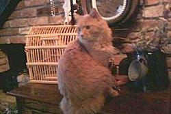 charliecat.jpg
